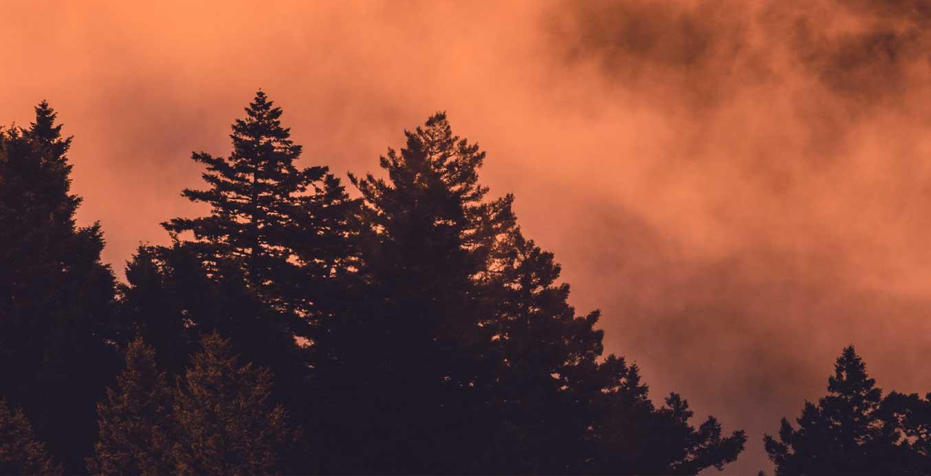 Zeit der inneren Besinnung – Bäume im herbstlichen Licht