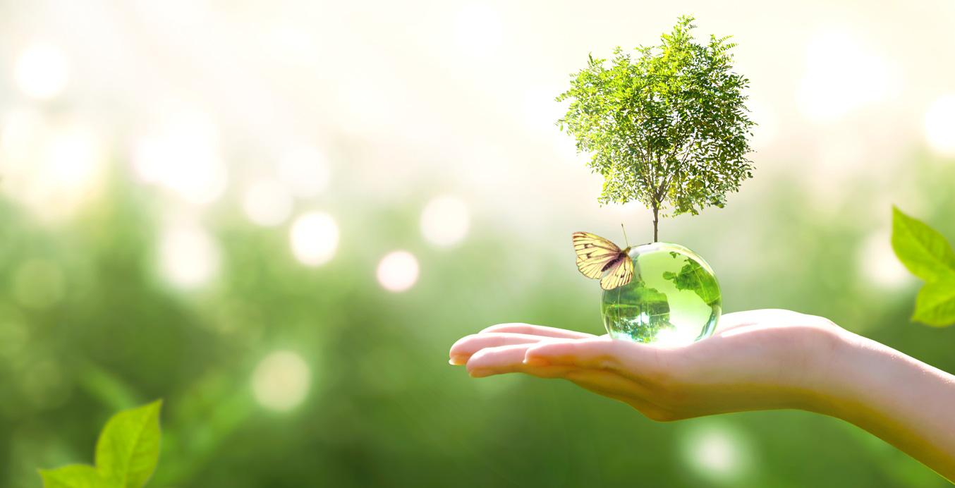 Baum des Lebens in einer Hand
